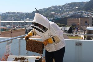 beekeeper Cenna checking the bees