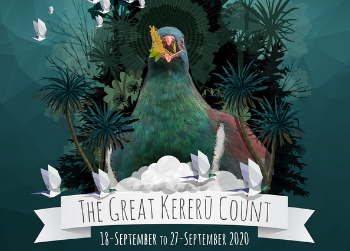 The Great Kererū Count is here!