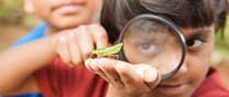 Looking at bugs image