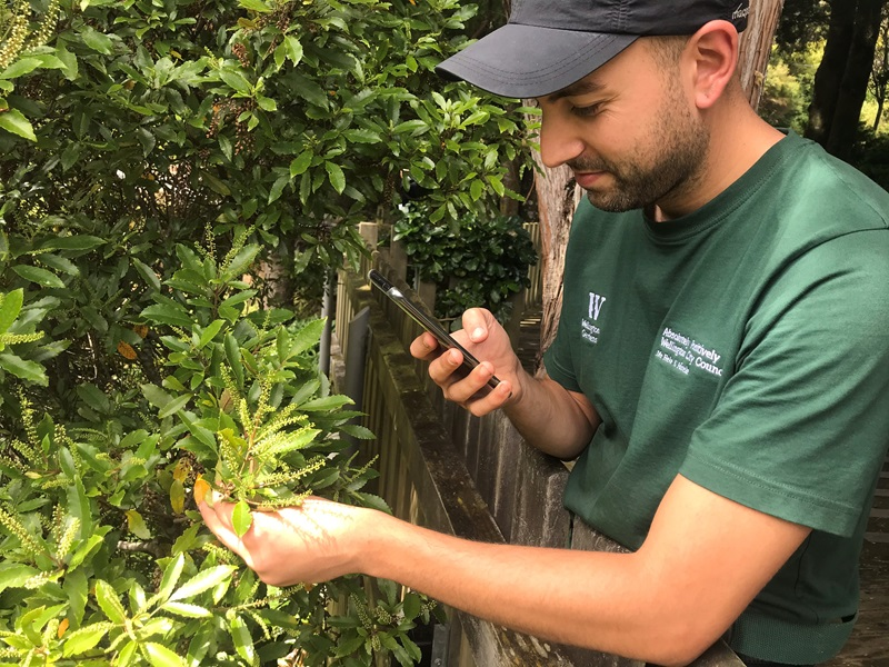 WCC gardener photographing a plant using the iNaturalist app at a Wellington City garden.