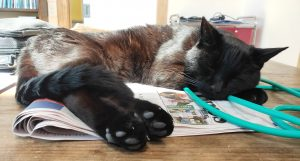 A black cat lying in the sun on top of a newspaper. His head is resting on his front paws and his back paws are pointing towards the camera showing you their toe beans.