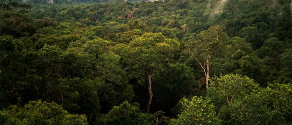 Image of the Amazon rainforest