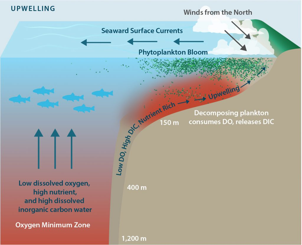 Drivers of hypoxia and acidification in our oceans