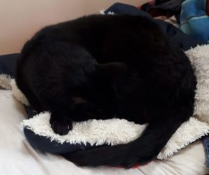 A black cat curled in a ball on a white cushion. He is a black blob with a tail. All detail has disappeared into a void of black.