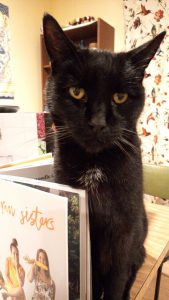 A black cat sitting on the edge of a table with a copy of Two Raw Sisters standing open in front of him to stop him moving any further forward. He has a small white patch under his chin, and a look of complete and utter betrayal in his golden eyes.