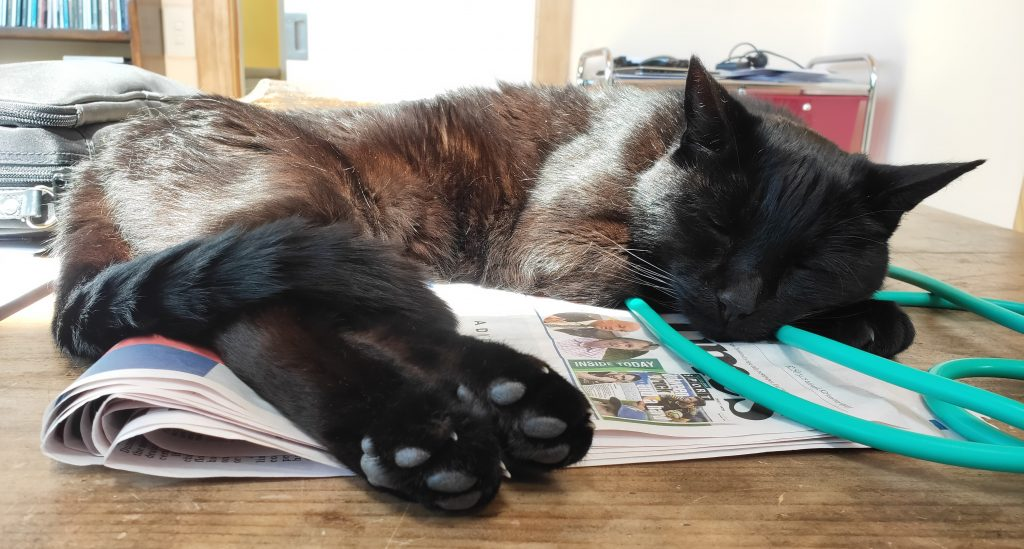 Poot lies sleeping curled on his side on top of a newspaper in the sun. His head is resting on his front paws and his back paws with their toe beans are extended towards the camera.