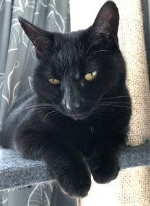 A dainty black cat lying on a platform. Her front paws are slightly hanging over the edge towards the camera and her pale yellow eyes are slightly downcast.
