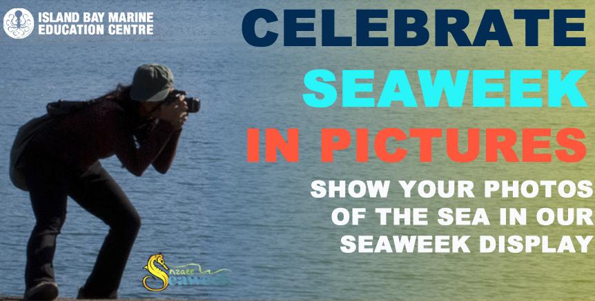 Seaweekblog